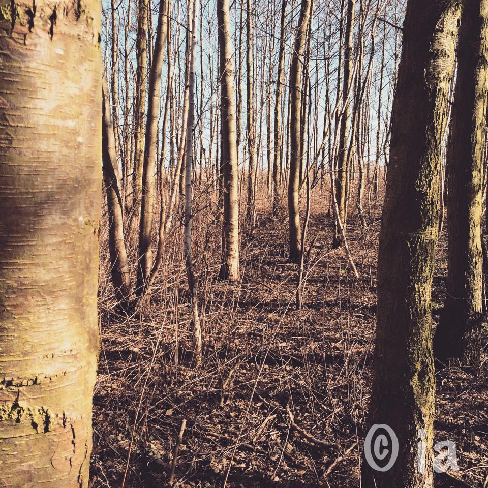 copyrightforestforalltrees